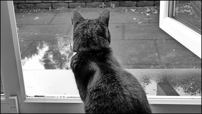Cat sitting at an open door, considering